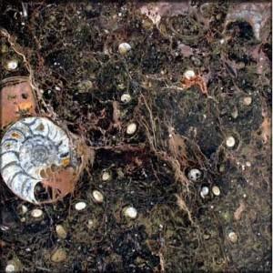 Marron Fossil